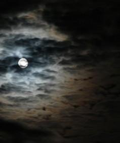 polowanie noc