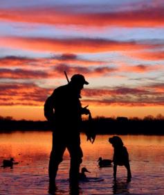 polowanie na kaczki